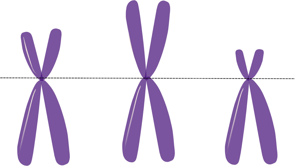 Cromosomas 1280 1024x578 - Telómeros éxitos y hallazgos