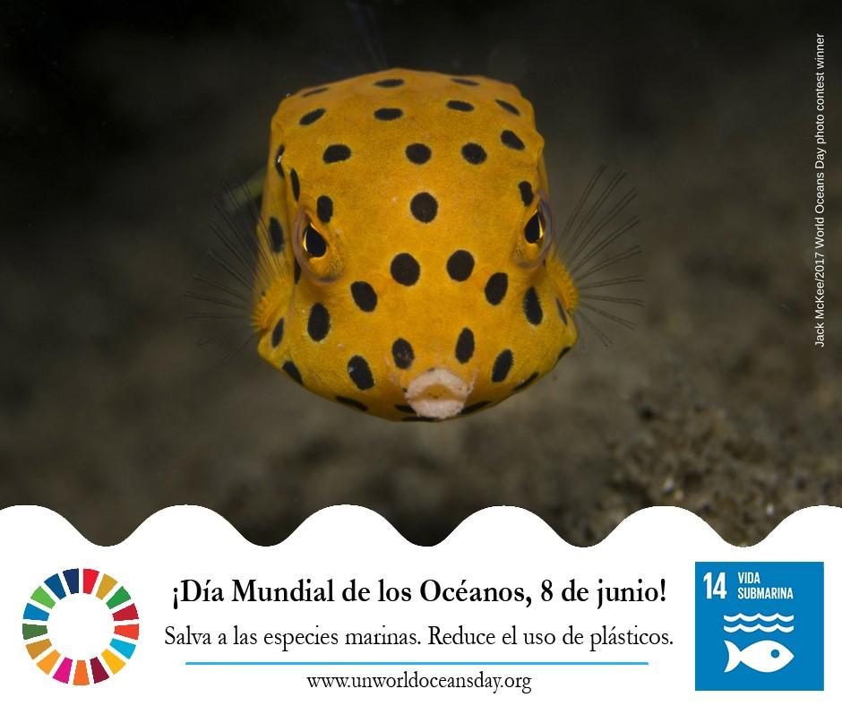 Dia Oceanos2 - Día mundial de los Océanos, 2019